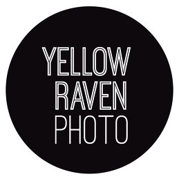 Yellow Raven Photo