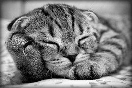 Кот Kot