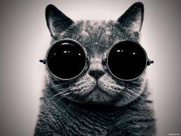 Photo Cat