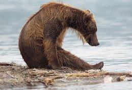Вова Медвед'ъ