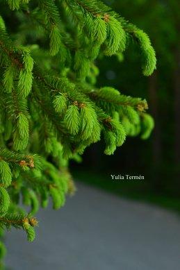 Yulia Ter