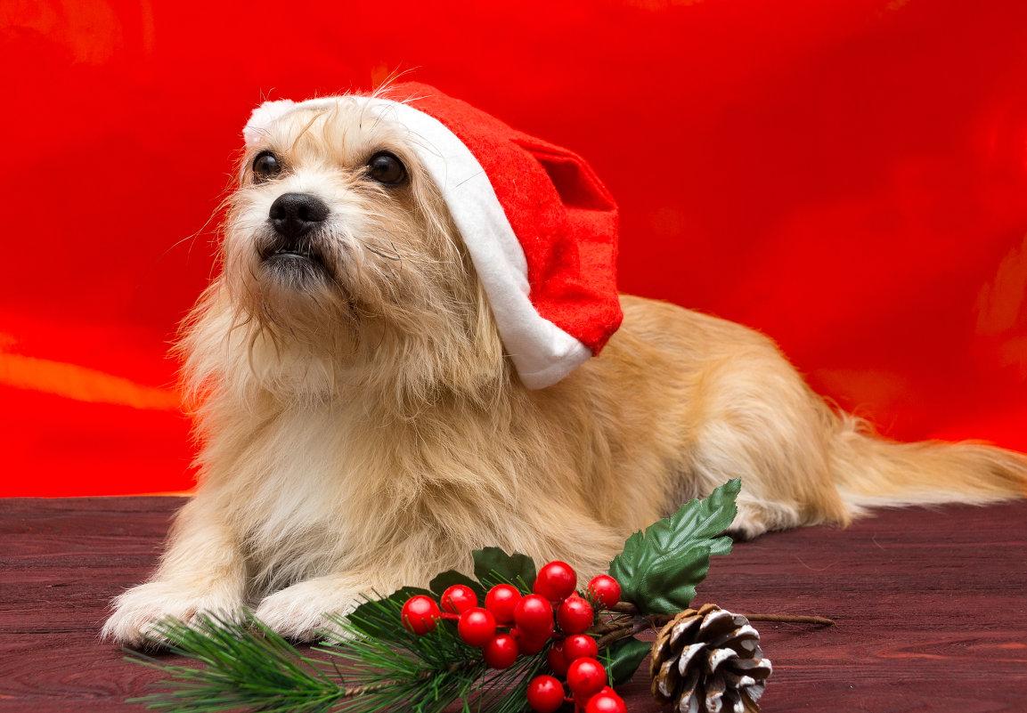 Новогодний Пёс - Alex Bush