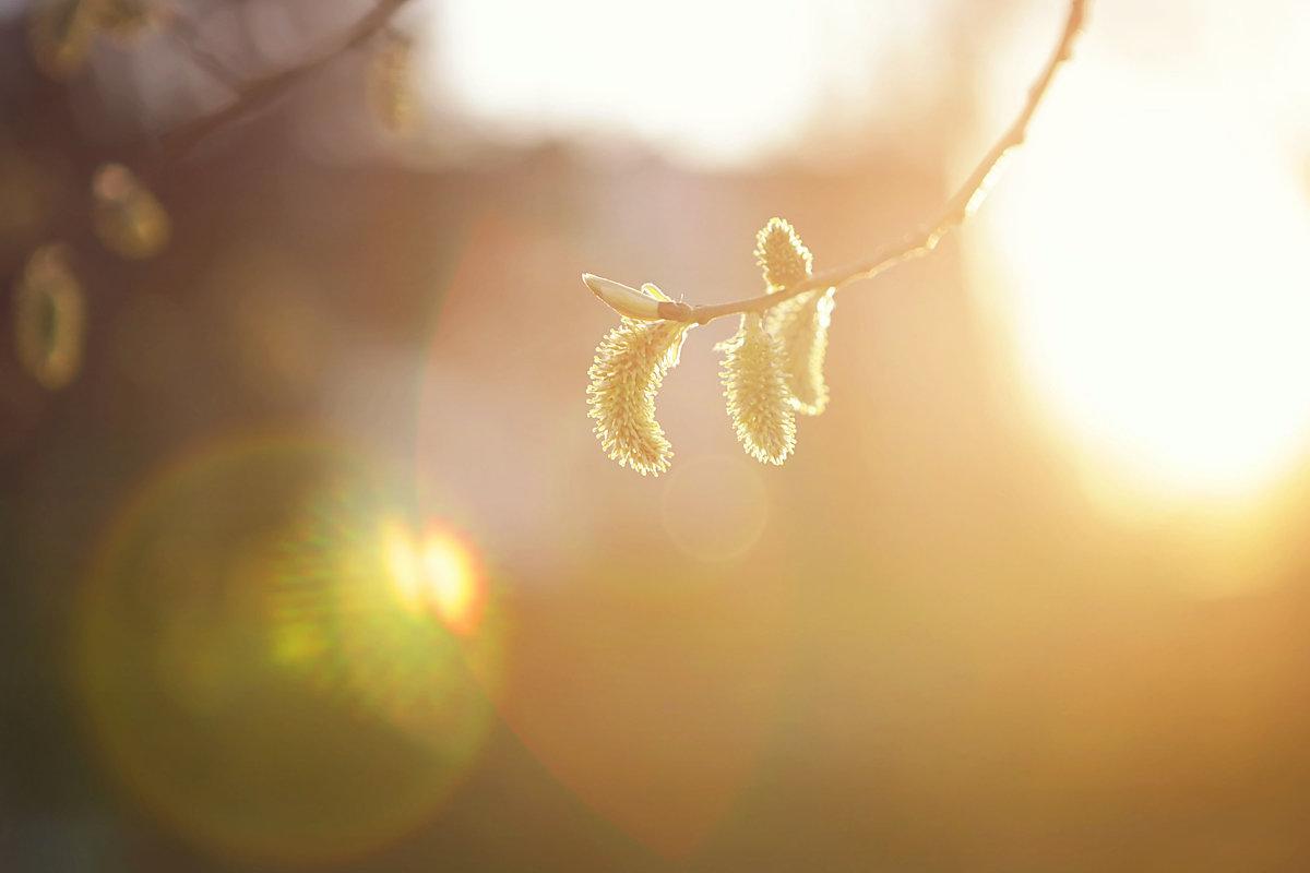 Пробуждение природы - Ирина Лежнева