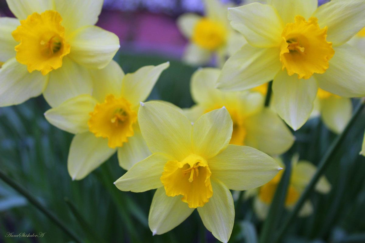 Весна пришла.... - Анна Шишалова