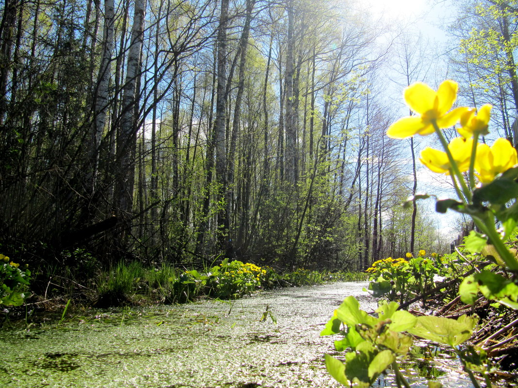 Весна на даче. - Виктория Чурилова