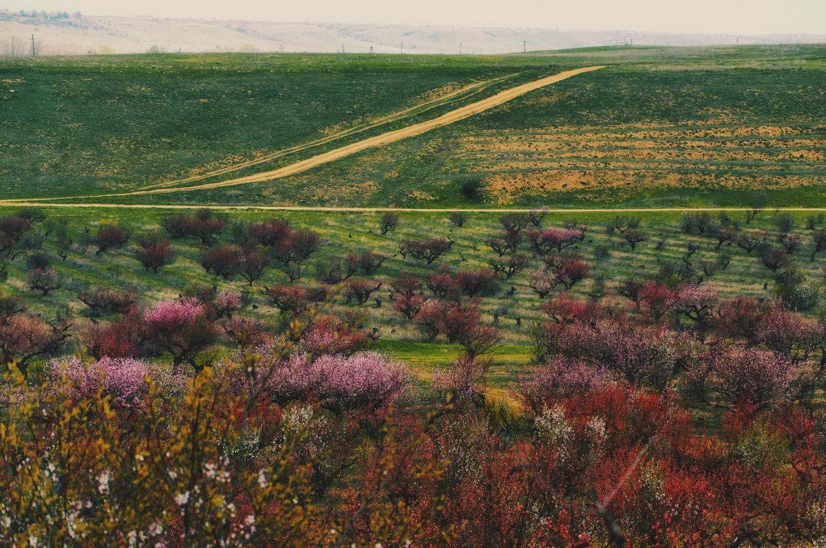 Весна. Цветущий персиковый сад - Ольга Мальцева