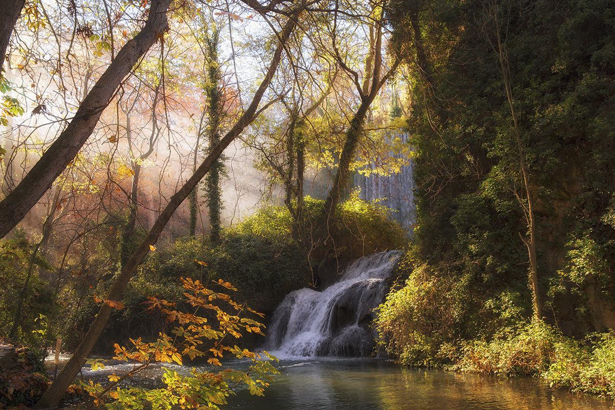Раннее утро в осеннем лесу - Maria