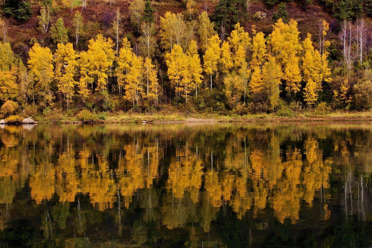 Осенние берёзки у воды - Сергей Чиняев