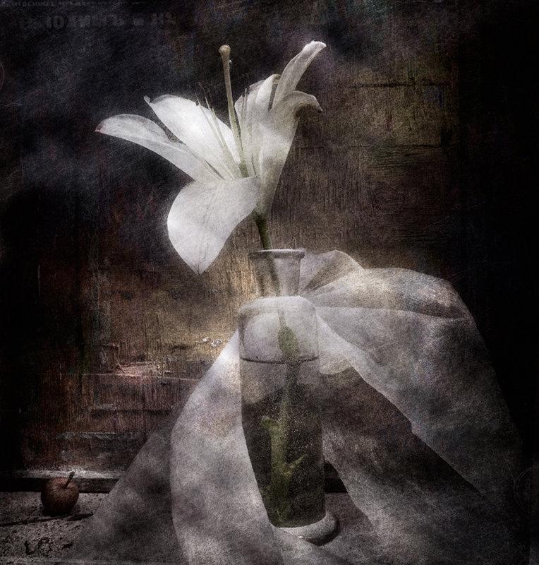 Белая лилия - Владимир