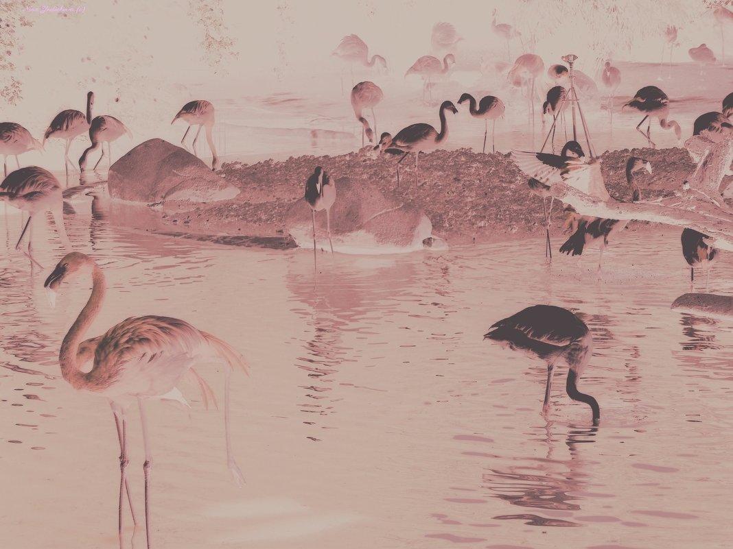 Фламинго - Nina Yudicheva