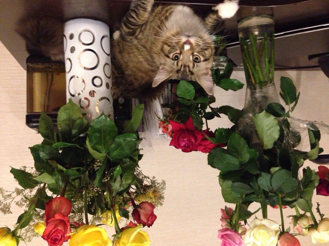 Какие люблю я цветы