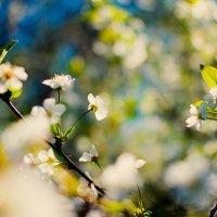 spring spirit :: Ивета Урлина