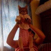 Кот в памперсе :: Ольга Гагаузова