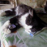 Курящий кот :: Ольга Гагаузова