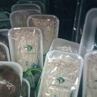 китайские грибы :: Евгения Шилкова
