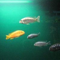 Рыбки :: Екатерина Ковель