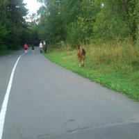 Дорожка для бега :: Анастасия Томилова