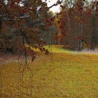 Осенняя полянка :: Михаил Колокольников