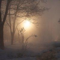 Туманное утро :: Максим Судаков