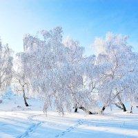 Мороз и солнце... :: Александр Первойкин