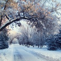 Морозный день :: antoshina_ t