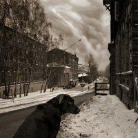 На обочине жизни :: Сергей Туранов