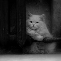 Одиночество :: Владимир Кочкин