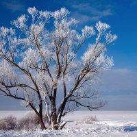 Зимние кружева :: Геннадий Новов