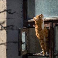 запах весны :: Сергей Мигунов