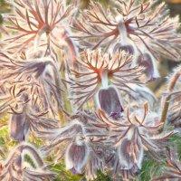 Волшебная сон-трава :: Татьяна Бондарева