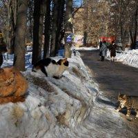 К марту готовсь! :: Алексей Фокин