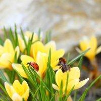 Весна для всех :: Андрей Белецкий