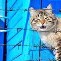 Мартовский кот) :: Seda Yegiazaryan