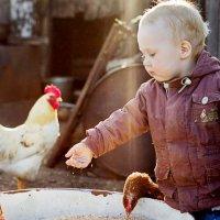 Мальчик кормит куриц :: Елена Бородихина