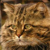 портрет моего кота :: Igor Gogolev