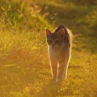Солнечный котёнок :: Максим Судаков