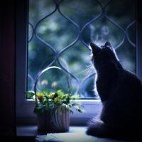 о кошке. :: Лариса Кояшова