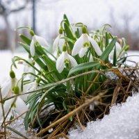 Символ весны :: sorovey Sol