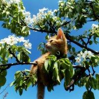 Весенний котеноу :: оксана косатенко