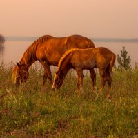 Ходят кони... :: Владимир