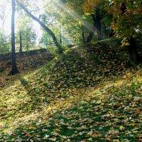 Просто осень пришла... :: Наталия