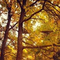 осенний лес :: Таня