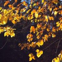 Прекрасный сентябрь :: Елена