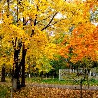 Золотая осень в городском парке :: Елена Семигина
