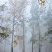 Туманное утро :: Роман Кондрашин