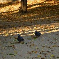 прогулка голубей :: Mariya