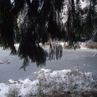 На пруду под елкой :: Liubov Garkusha