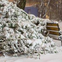 первый снег :: Николай Хо