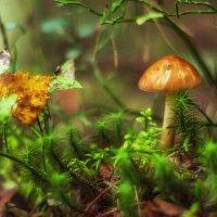 Цветная маленькая осень :: Сергей В. Комаров