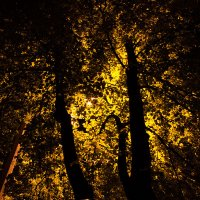 Ночь, улица, фонарь... :: Евгений Ярдов